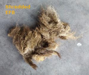 Shredded EFB Fibre
